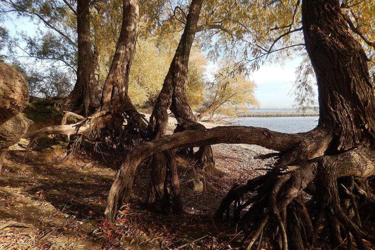 Bomen Van Betekenis