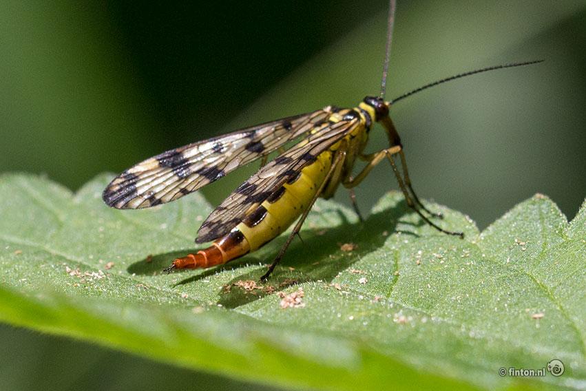 Presentatie Onderzoek 'Insecten Op De Beuningse Dijk'