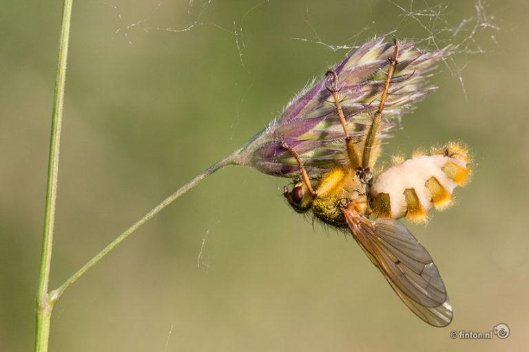 Gehoorzaam Aan De Insectendoder