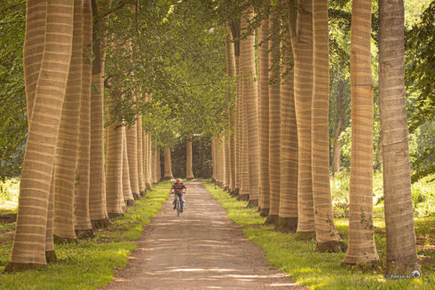 Steunkousen Om De Bomen