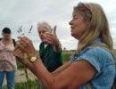 Plantenexcursie In Kleine Willemswaard Tiel