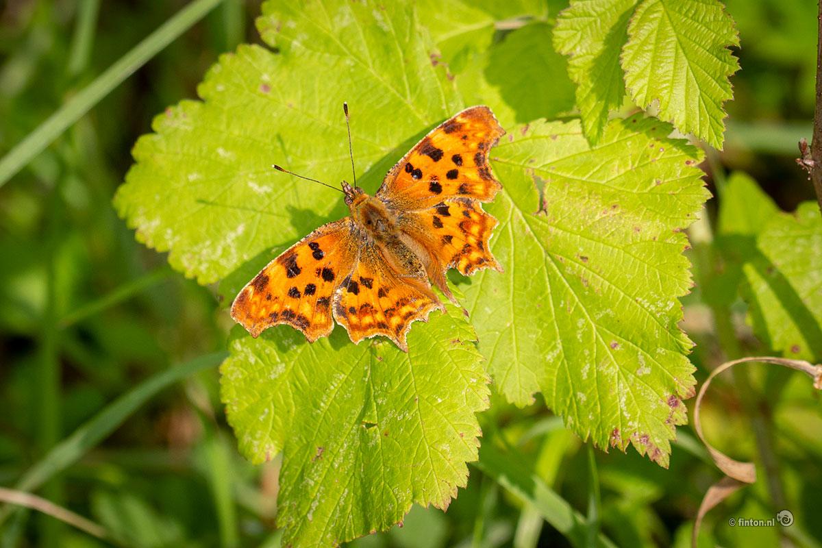 Landelijke dag Vlinderstichting