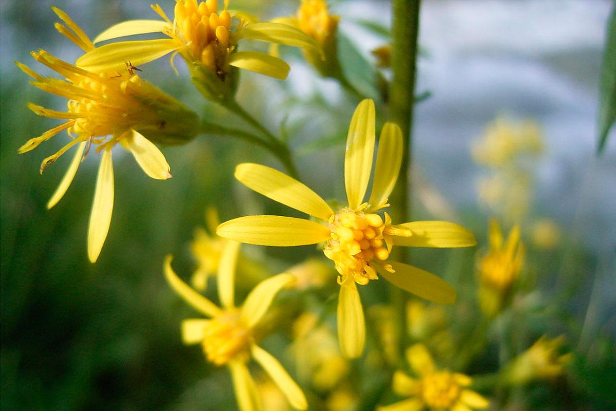 Botanische Hotspots In Het Rivierenland
