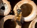 Zo Kan Jij De Bijen Helpen