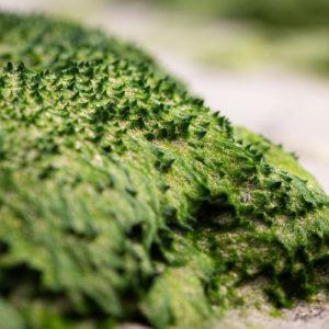 Algen Vormen Van Dichtbij Een Fascinerend Microlandschap
