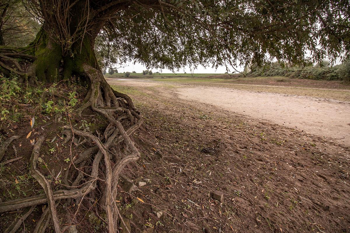 Dryland Passewaaij