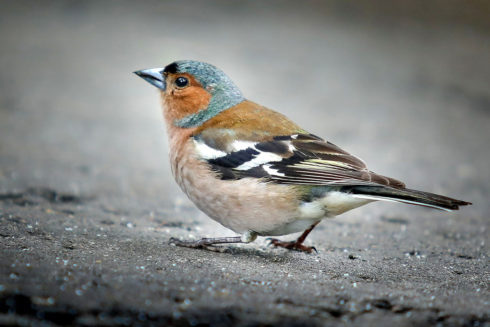 Doe Mee Met De Nationale Tuinvogeltelling