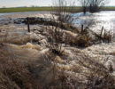 Hoogwater In Rivierenland