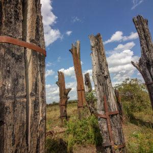 Woodhenge.
