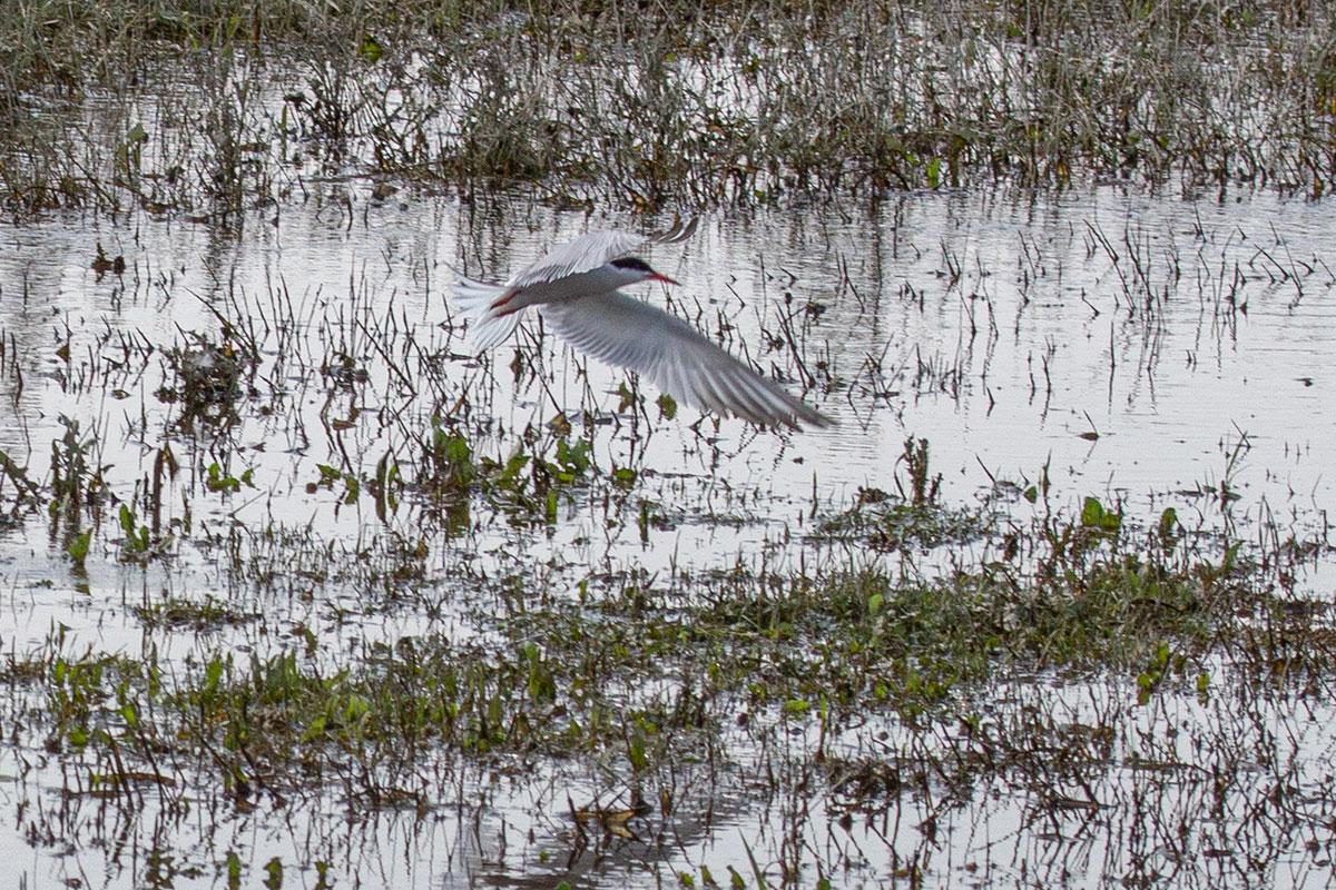 Vogelexcursie in de Kleine Willemswaard